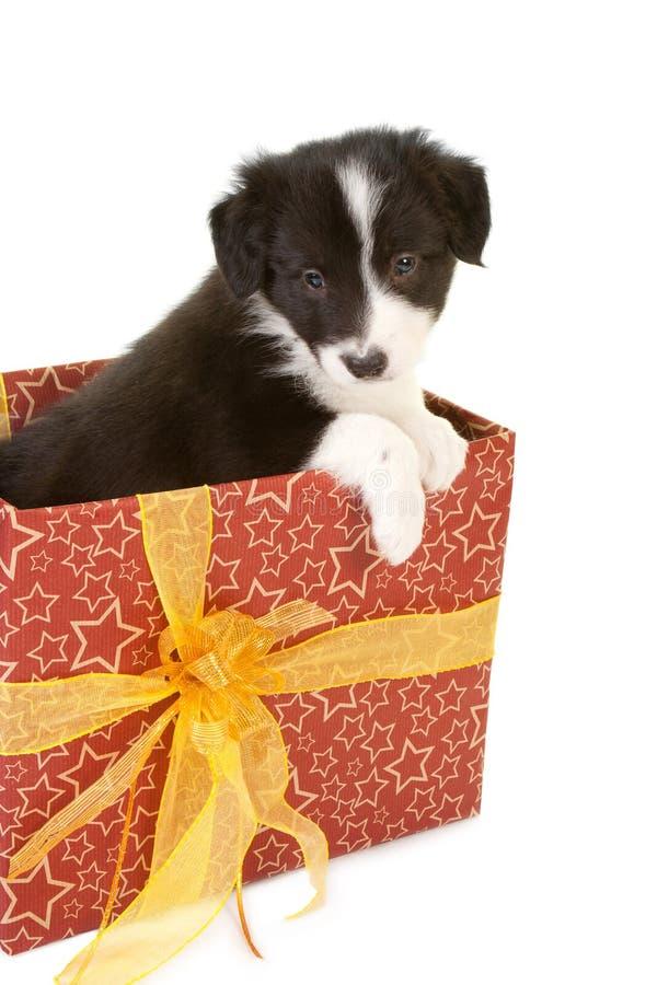Κουτάβι χριστουγεννιάτικου δώρου στοκ εικόνες με δικαίωμα ελεύθερης χρήσης