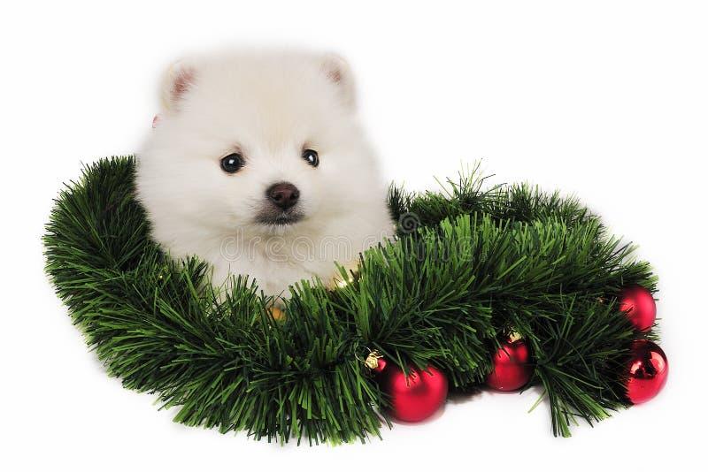 κουτάβι χριστουγεννιάτ&iot στοκ εικόνα με δικαίωμα ελεύθερης χρήσης