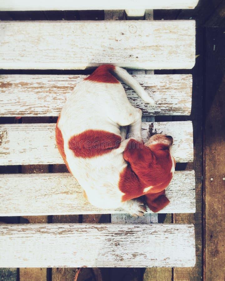 κουτάβι στοκ φωτογραφίες με δικαίωμα ελεύθερης χρήσης