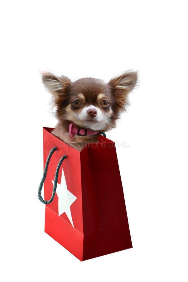Κουτάβι Chihuahua στην τσάντα δώρων στοκ φωτογραφία