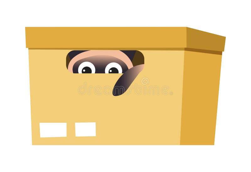 Κουτί από χαρτόνι με τη σιαμέζα γάτα που κρύβει το εσωτερικό κατοικίδιο ζώο ή το κατοικίδιο ζώο απεικόνιση αποθεμάτων
