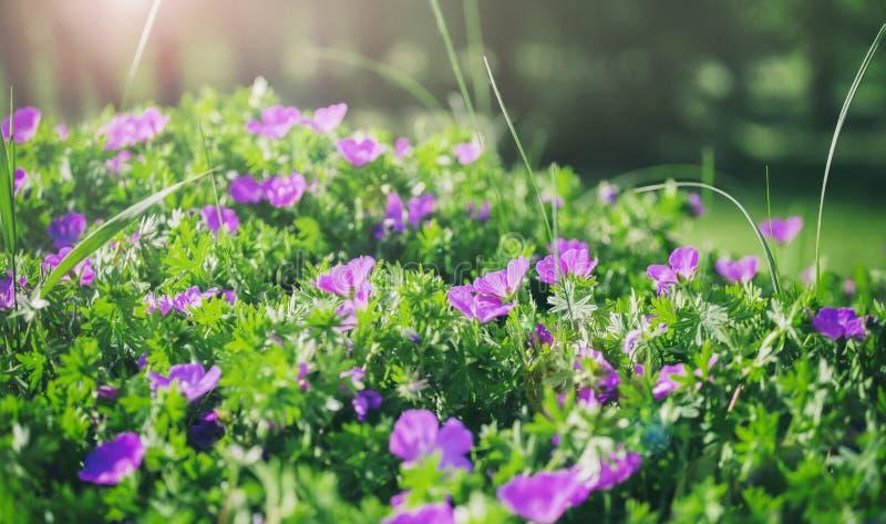 Κουδούνια λουλουδιών του υποβάθρου τομέων μπλε σύννεφων πλήρες πράσινο τοπίο εστίασης πεδίων ημέρας οφειλόμενο λίγη μετακίνηση όχ στοκ φωτογραφία