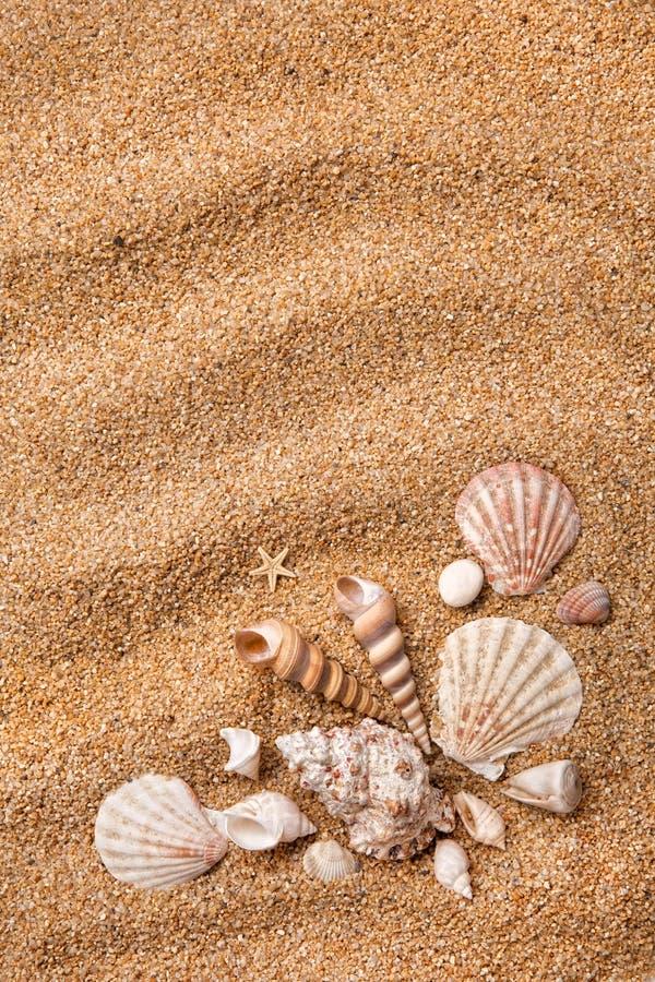 κοχύλια άμμου πλαισίων δι στοκ εικόνες με δικαίωμα ελεύθερης χρήσης