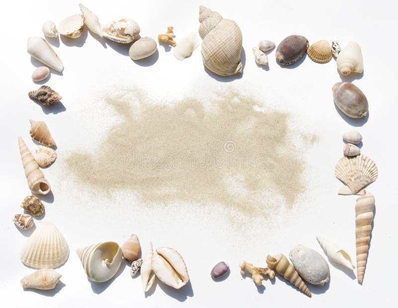 κοχύλια άμμου πλαισίων στοκ φωτογραφία με δικαίωμα ελεύθερης χρήσης