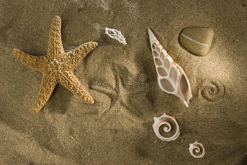 κοχύλια άμμου στοκ φωτογραφίες με δικαίωμα ελεύθερης χρήσης