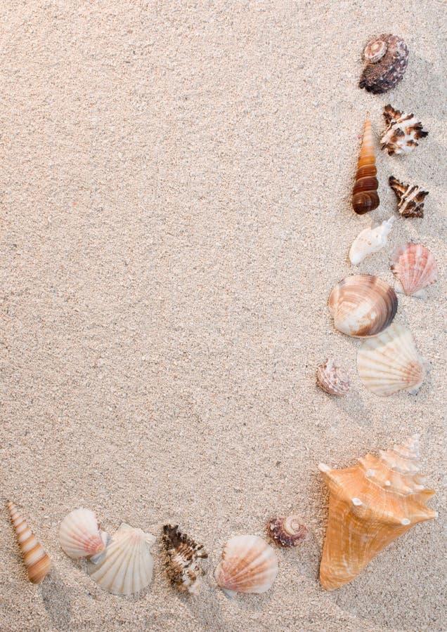κοχύλια θάλασσας άμμου π& στοκ εικόνες