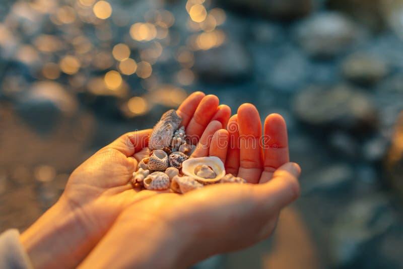 Κοχύλια θάλασσας στο χέρι στοκ φωτογραφίες