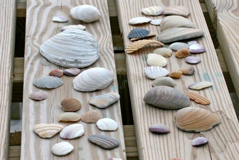 κοχύλια θάλασσας στοκ φωτογραφία με δικαίωμα ελεύθερης χρήσης