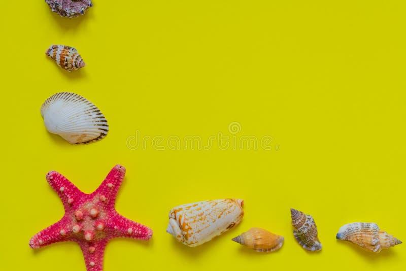 Κοχύλια και αστερίας θάλασσας στο ανοικτό κίτρινο υπόβαθρο με το διάστημα αντιγράφων r στοκ φωτογραφία με δικαίωμα ελεύθερης χρήσης
