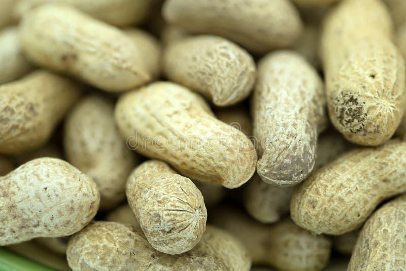 Κοχύλια καρυδιών και φυστικιών πιθήκων στοκ φωτογραφία με δικαίωμα ελεύθερης χρήσης