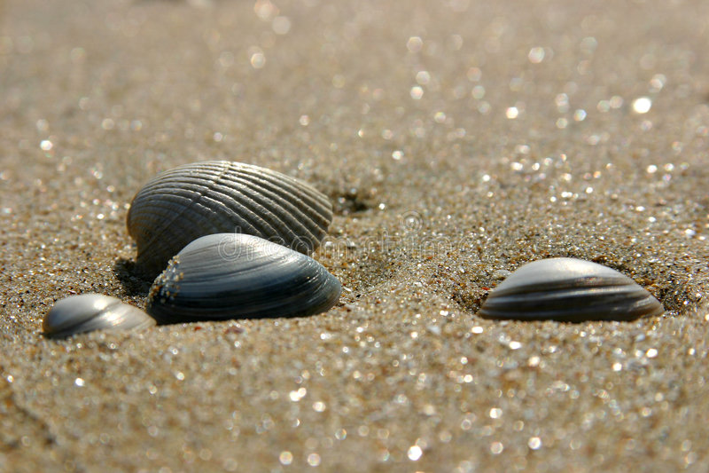 Download κοχύλια παραλιών στοκ εικόνες. εικόνα από κοχύλια, ωκεανός - 125116