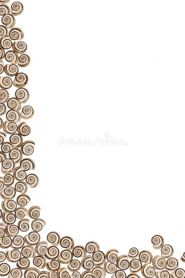 κοχύλια πλαισίων στοκ φωτογραφία