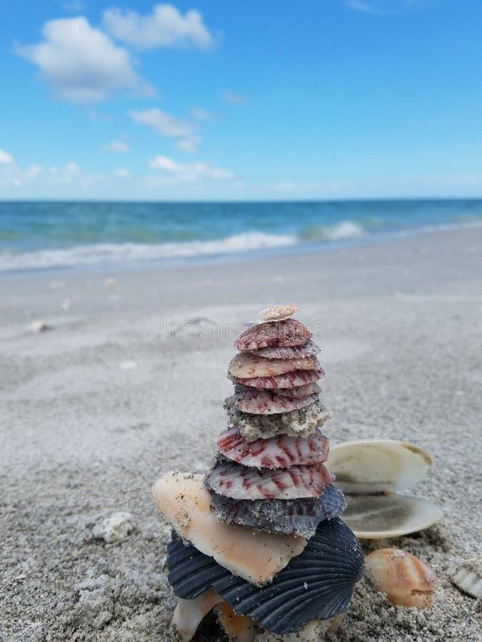 Κοχύλια που συσσωρεύονται κοντά στο νερό στην παραλία στοκ εικόνες με δικαίωμα ελεύθερης χρήσης