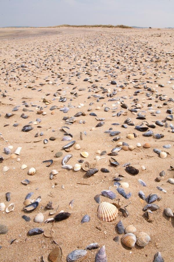 Κοχύλια σε μια παραλία στοκ φωτογραφίες
