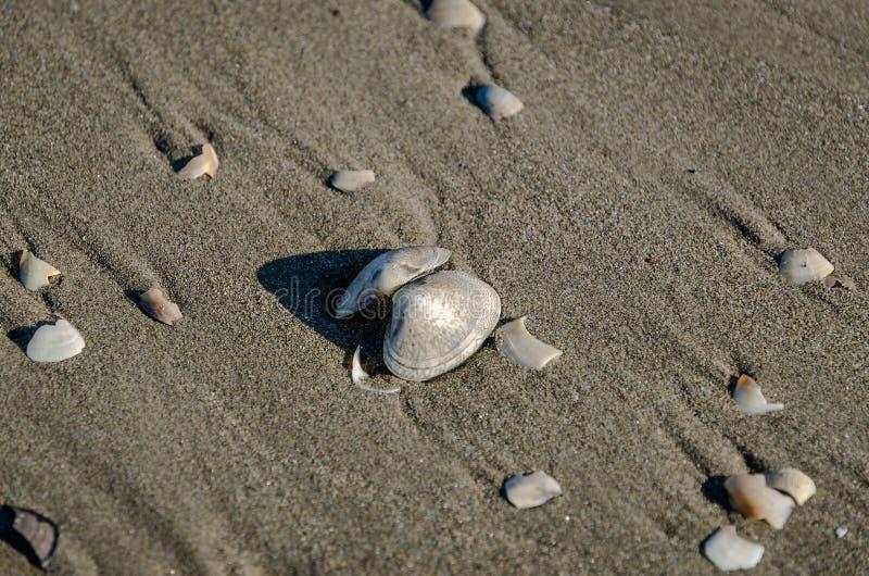 Κοχύλια στην άμμο μιας ηλιόλουστης παραλίας στοκ εικόνα με δικαίωμα ελεύθερης χρήσης