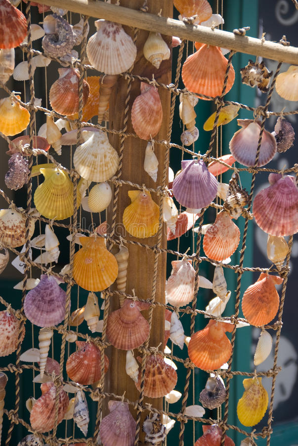 Download κοχύλια ψαριών στοκ εικόνες. εικόνα από συλλογή, ψάρια - 17057106