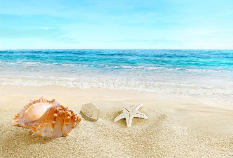 Κοχύλια ‹â€ ‹θάλασσας †στην παραλία στοκ φωτογραφία