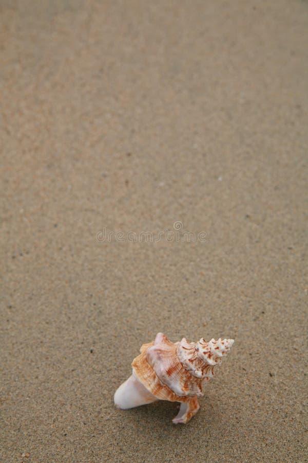 κοχύλια στοκ φωτογραφίες