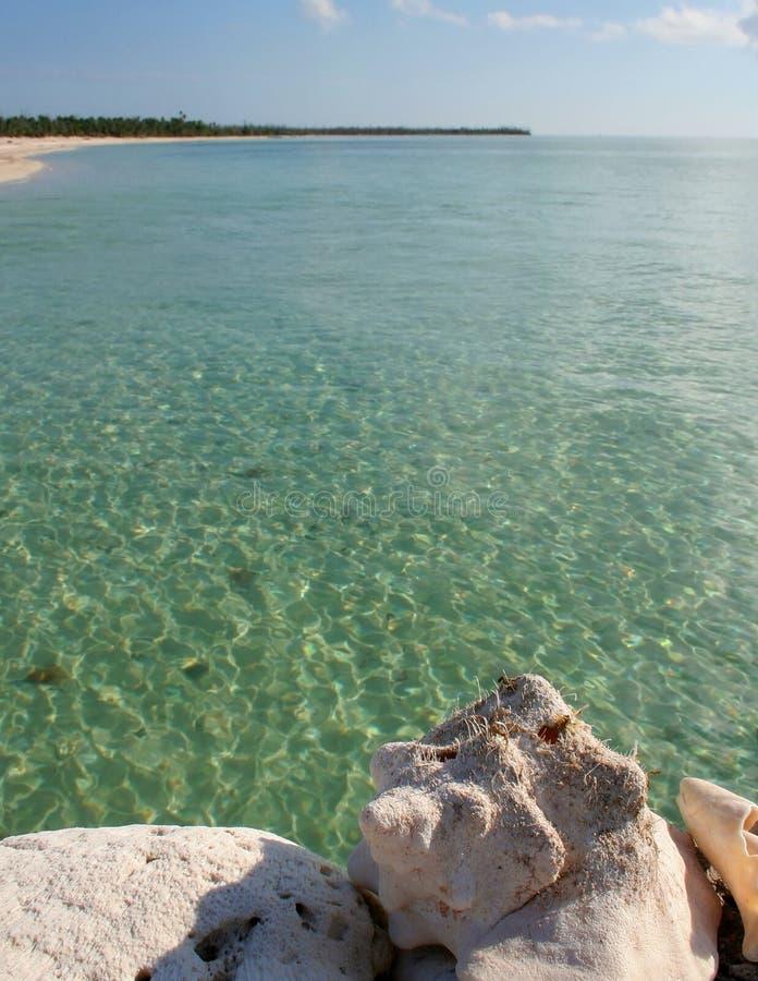 Κοχύλι θάλασσας και θάλασσα στοκ εικόνα με δικαίωμα ελεύθερης χρήσης