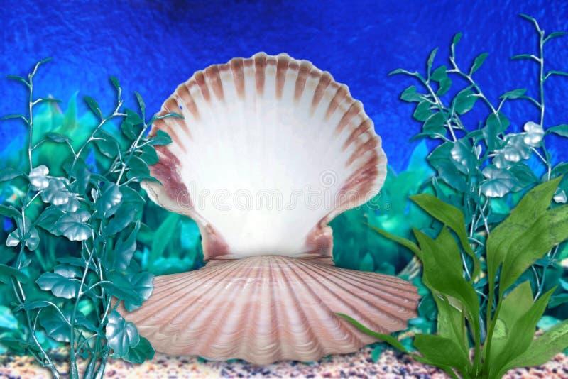 κοχύλι θάλασσας σκηνής γοργόνων ενυδρείων στοκ εικόνα