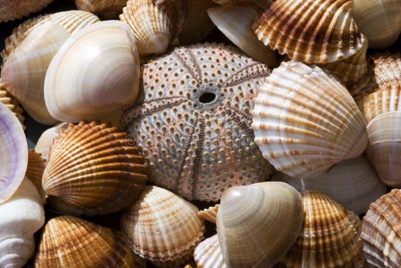 κοχύλι θάλασσας συλλ&omicron στοκ εικόνες