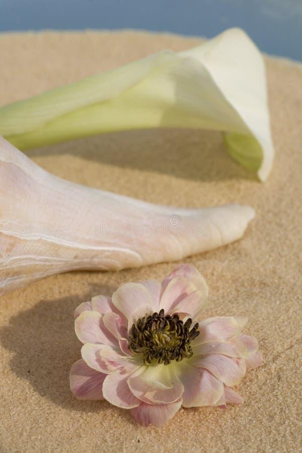 κοχύλι λουλουδιών στοκ φωτογραφία με δικαίωμα ελεύθερης χρήσης