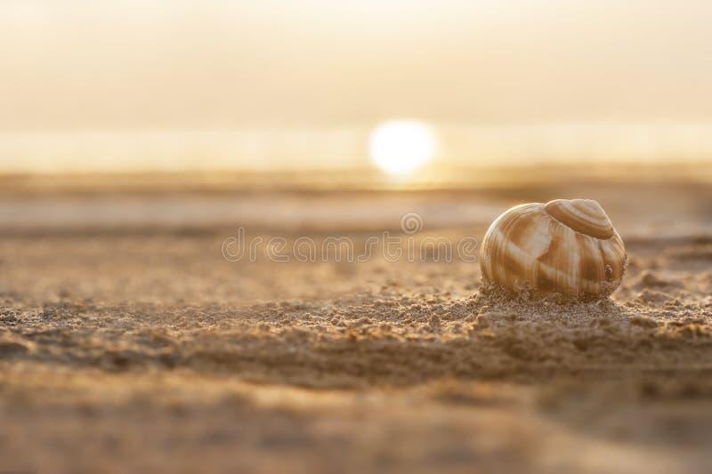 Κοχύλι σαλιγκαριών με την άμμο και ηλιοβασίλεμα στη λίμνη Burdur στην Τουρκία στοκ εικόνες