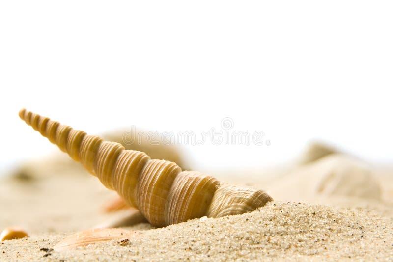 Download κοχύλι στοκ εικόνες. εικόνα από μεγάλος, seashell, μακροεντολή - 13185480
