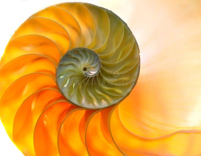 κοχύλι nautilaus 2 στοκ φωτογραφία με δικαίωμα ελεύθερης χρήσης