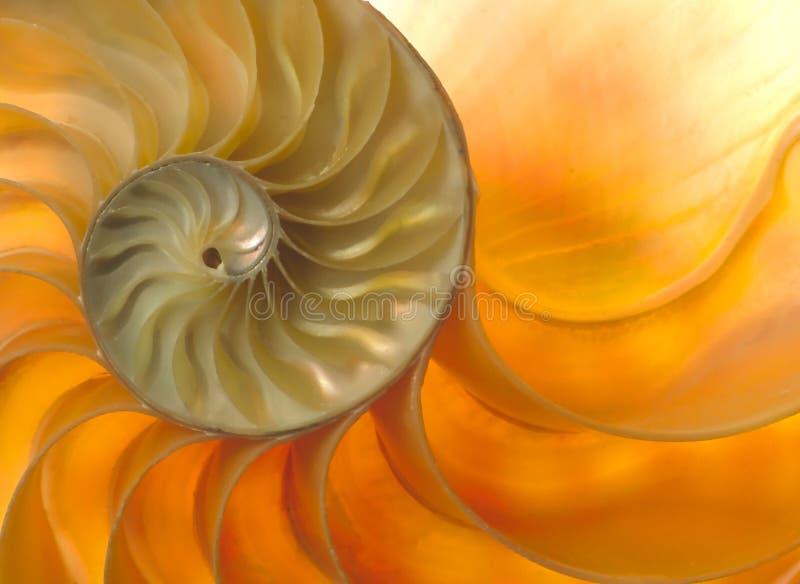 κοχύλι nautilaus στοκ εικόνες