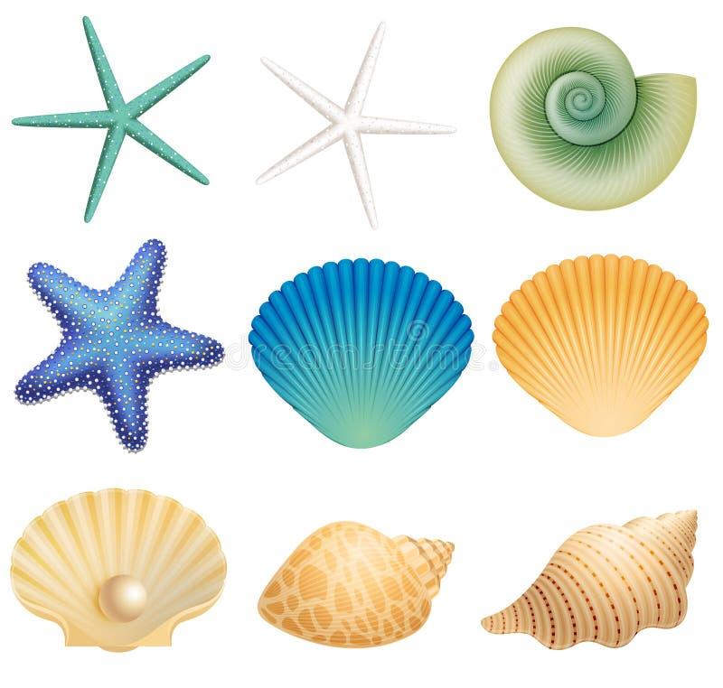 Κοχύλια θάλασσας και αστέρι θάλασσας ελεύθερη απεικόνιση δικαιώματος