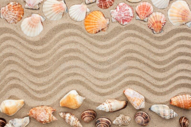 Κοχύλια θάλασσας με την άμμο ως υπόβαθρο στοκ εικόνα με δικαίωμα ελεύθερης χρήσης