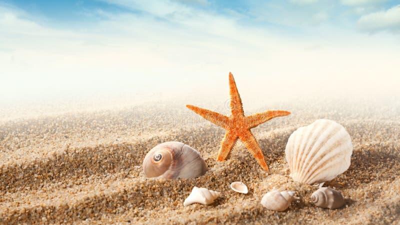 Κοχύλια θάλασσας στην άμμο στοκ εικόνα με δικαίωμα ελεύθερης χρήσης