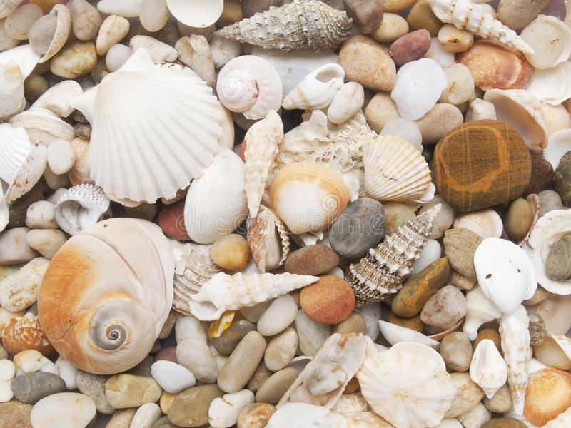 Κοχύλια θάλασσας στοκ φωτογραφίες με δικαίωμα ελεύθερης χρήσης