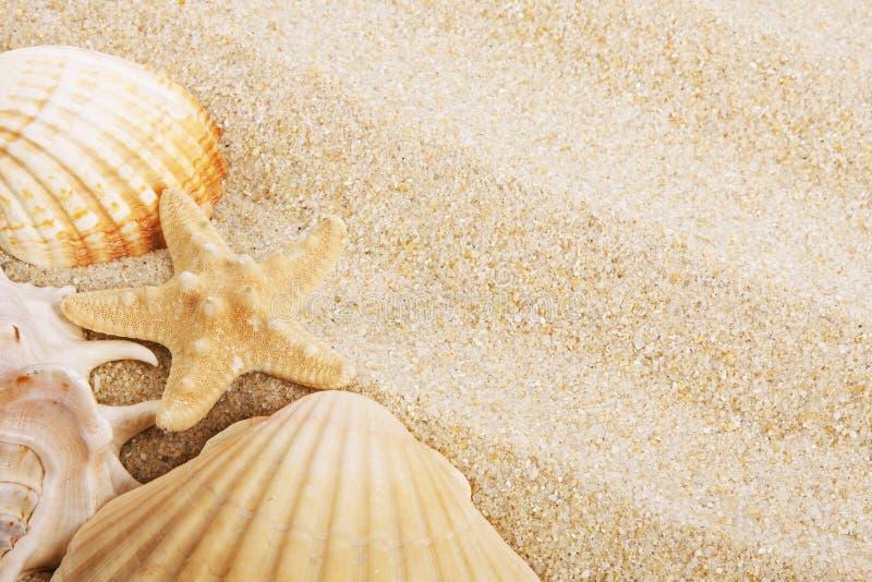 Κοχύλια και άμμος στοκ εικόνες
