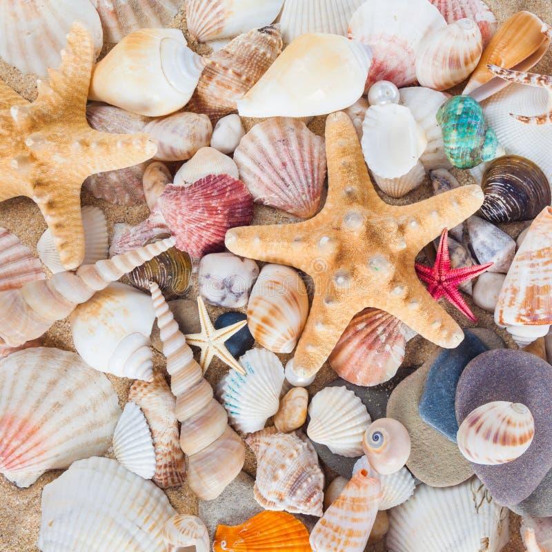 Κοχύλια και αστερίας στην αμμώδη παραλία Θερινή ανασκόπηση Καλοκαίρι ομο στοκ φωτογραφία