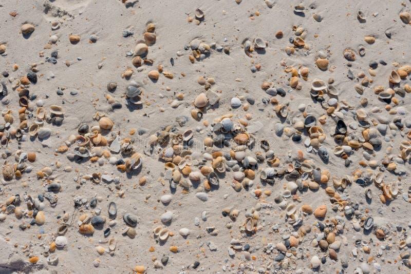 Κοχύλια που διασκορπίζονται πέρα από την αμμώδη παραλία στοκ φωτογραφία με δικαίωμα ελεύθερης χρήσης