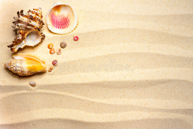Κοχύλια σε μια κυματιστή άμμο στοκ φωτογραφίες με δικαίωμα ελεύθερης χρήσης