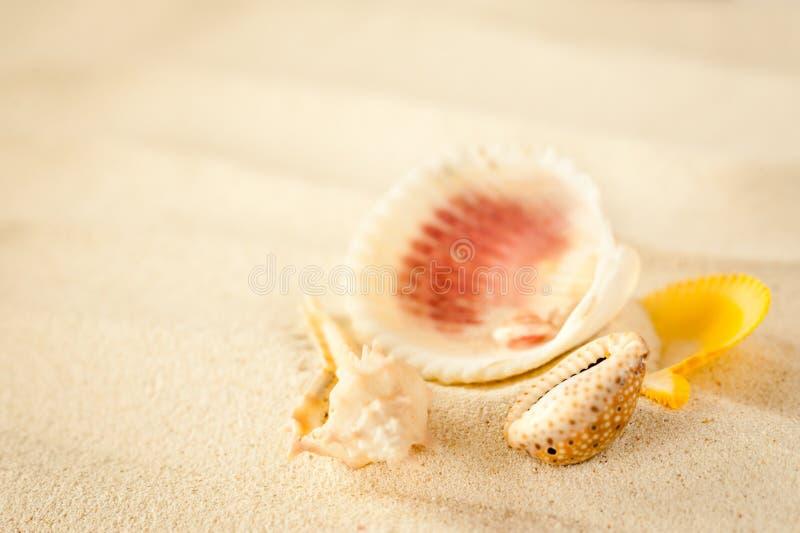 Κοχύλια σε μια κυματιστή άμμο στοκ εικόνες