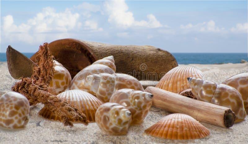 Κοχύλια στην άμμο με το σκηνικό της θάλασσας και του ουρανού στοκ φωτογραφίες