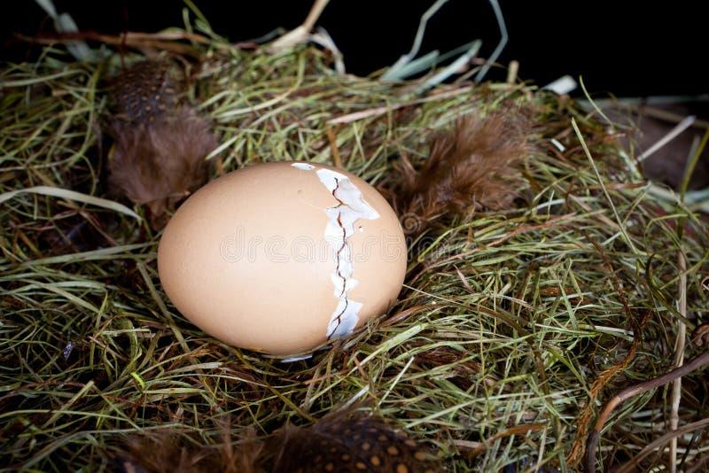 Κοχύλι αυγών Zipping στοκ φωτογραφίες