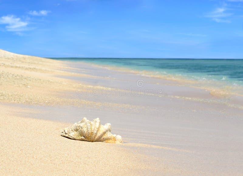 Κοχύλι θάλασσας στην αμμώδη παραλία με το μπλε ουρανό στοκ φωτογραφίες με δικαίωμα ελεύθερης χρήσης