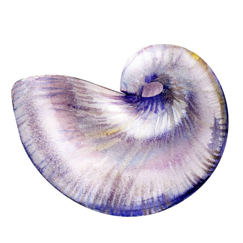 Κοχύλι θάλασσας Nautilus που απομονώνεται, απεικόνιση watercolor στο λευκό διανυσματική απεικόνιση