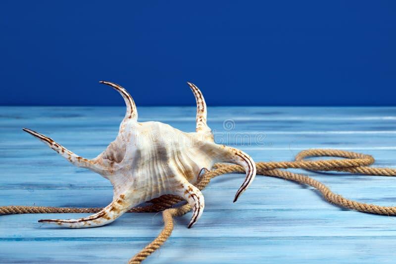 Κοχύλι και σχοινί θάλασσας στο μπλε υπόβαθρο στοκ φωτογραφίες