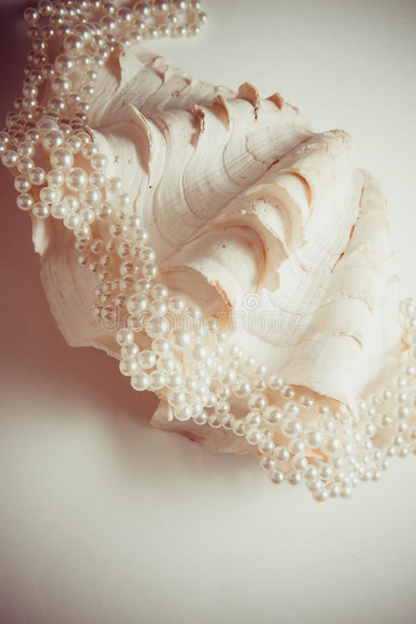 Κοχύλι μαργαριταριών στοκ φωτογραφία