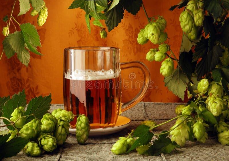 κούπα λυκίσκων μπύρας στοκ φωτογραφία με δικαίωμα ελεύθερης χρήσης