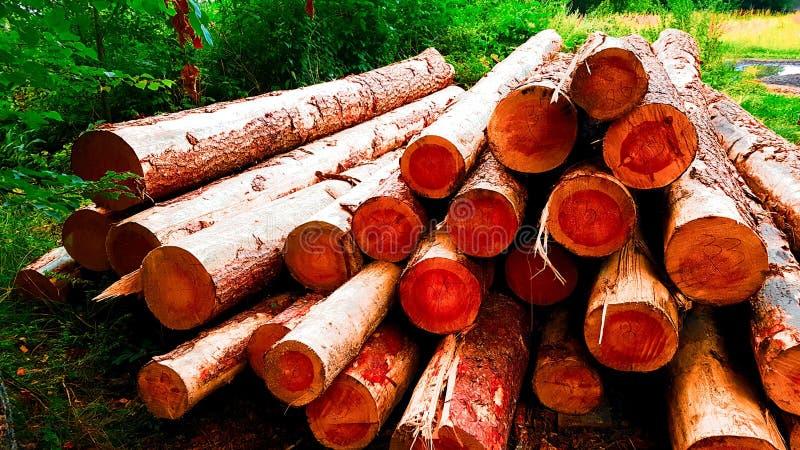 Κούτσουρα και ξύλα πυρκαγιάς στοκ εικόνα