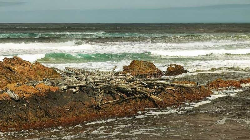 Κούτσουρα και συντρίμμια θύελλας στις εκβολές ποταμού αρθούρου στη δυτική ακτή της Τασμανίας στοκ φωτογραφία με δικαίωμα ελεύθερης χρήσης