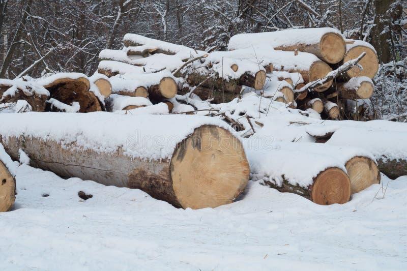 κούτσουρα Τεράστια κούτσουρα που σκιάζονται από το χιόνι στο χειμερινό πάρκο στοκ φωτογραφίες