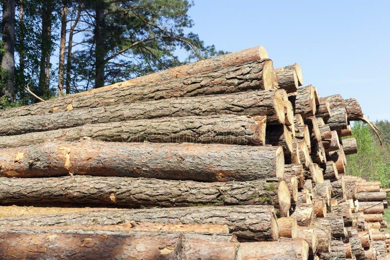 Κούτσουρα των δέντρων στοκ εικόνες με δικαίωμα ελεύθερης χρήσης